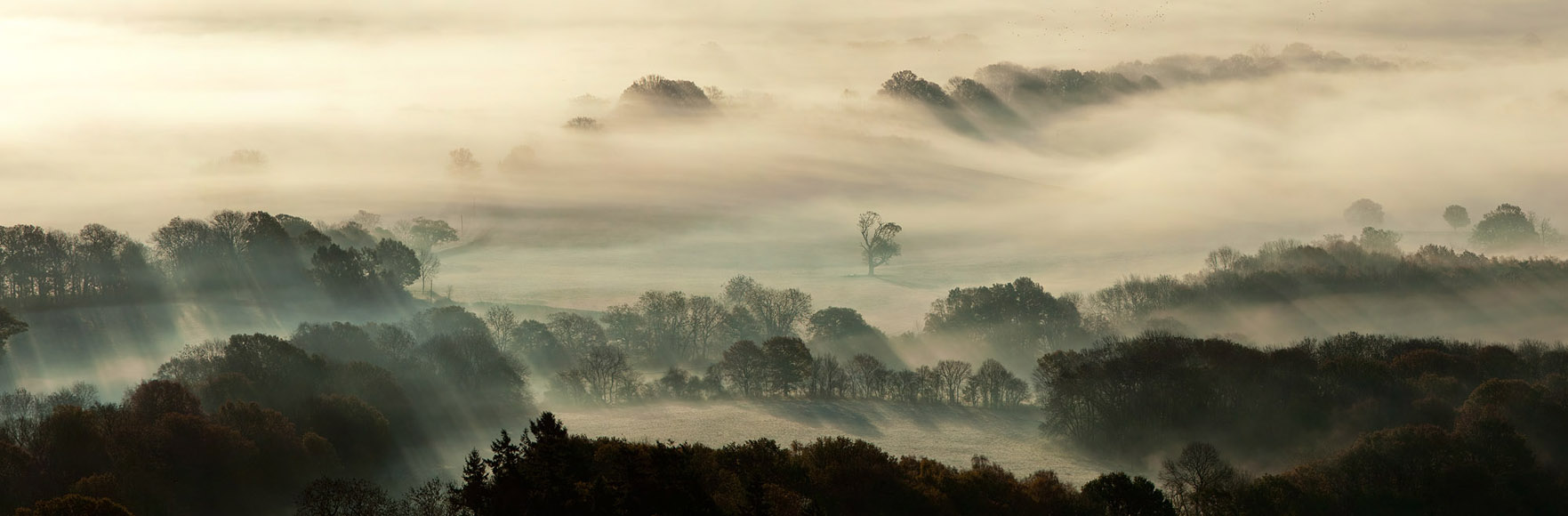 Leith Hill Early Morning Mist