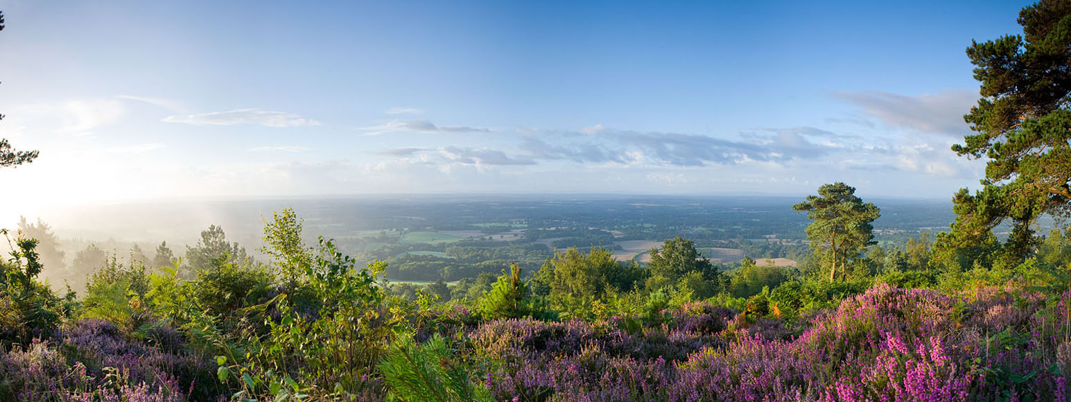 Leith HIll Heather Panorama